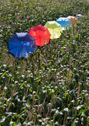Relatiegeschenk Golf paraplu Uni bedrukken