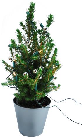 Relatiegeschenk Kerstboompje in luxe geschenksverpakking